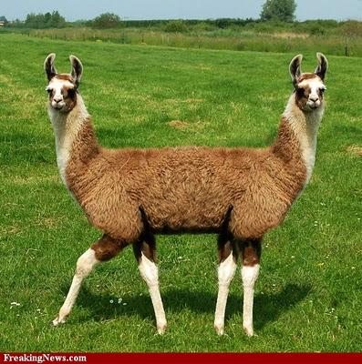 Pushmi-pullyu, Two-Headed Llama